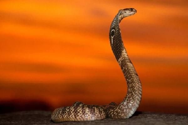 Ý nghĩa phong thủy của rắn