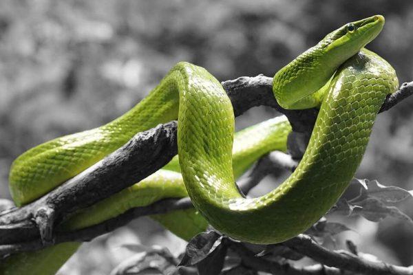 Những giấc mơ thấy rắn nói chung