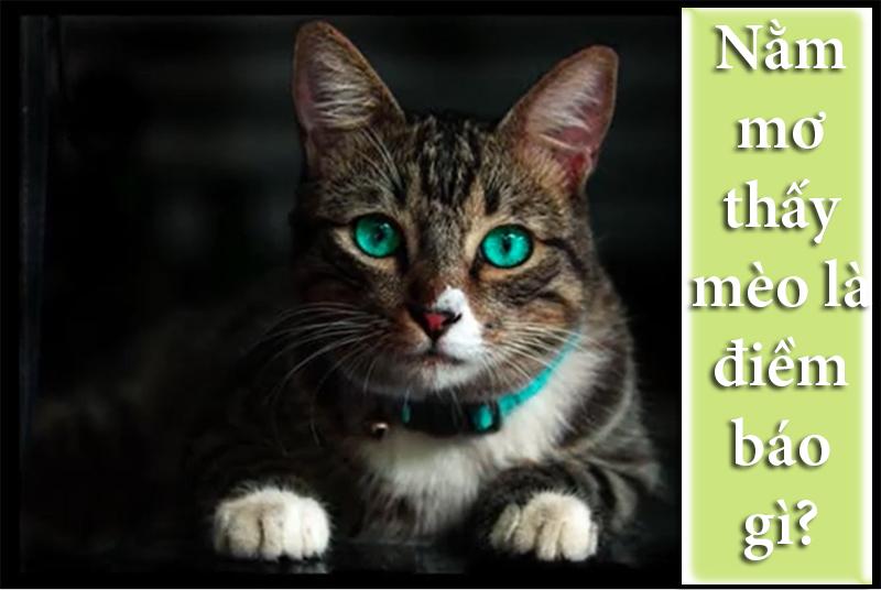 Nằm mơ thấy mèo là điềm báo gì?