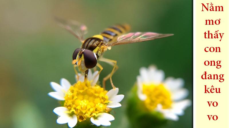 Nằm mơ thấy con ong đang kêu vo vo