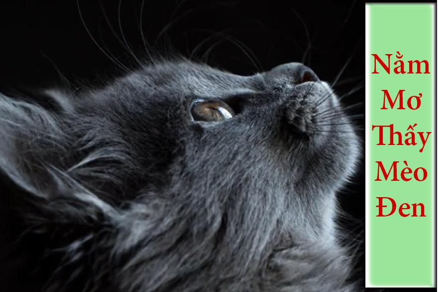 Nằm mơ thấy mèo đen