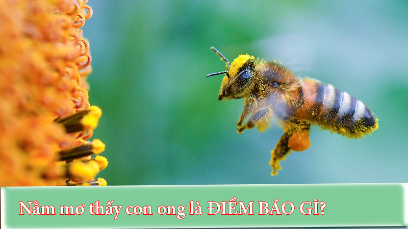 Nằm mơ thấy con ong là điềm báo gì?