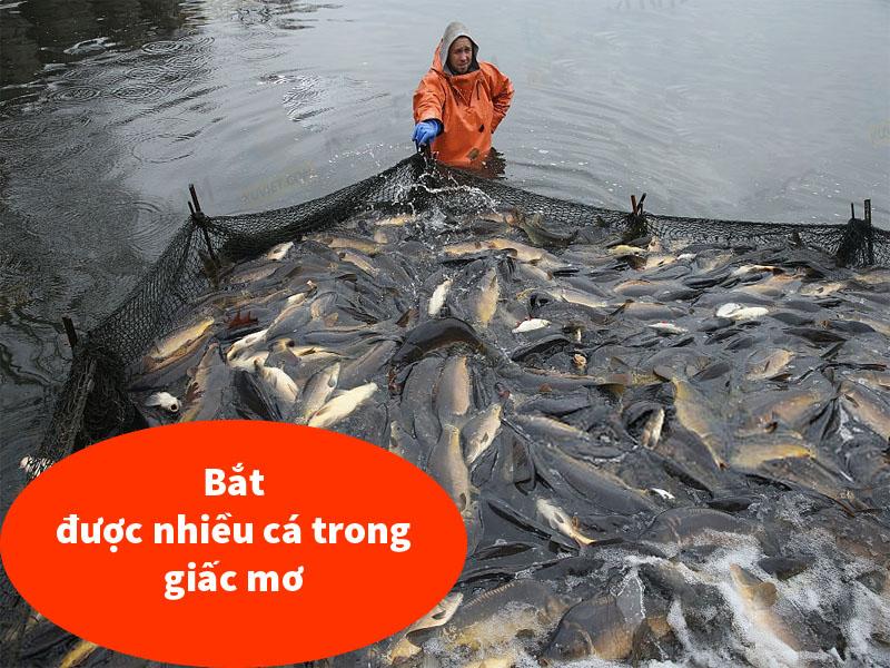 Bắt được nhiều cá trong giấc mơ