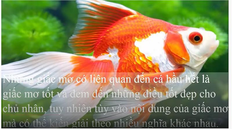 Nằm mơ thấy cá