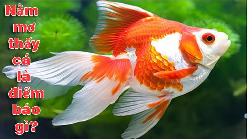 Nằm mơ thấy cá là điềm báo gì?